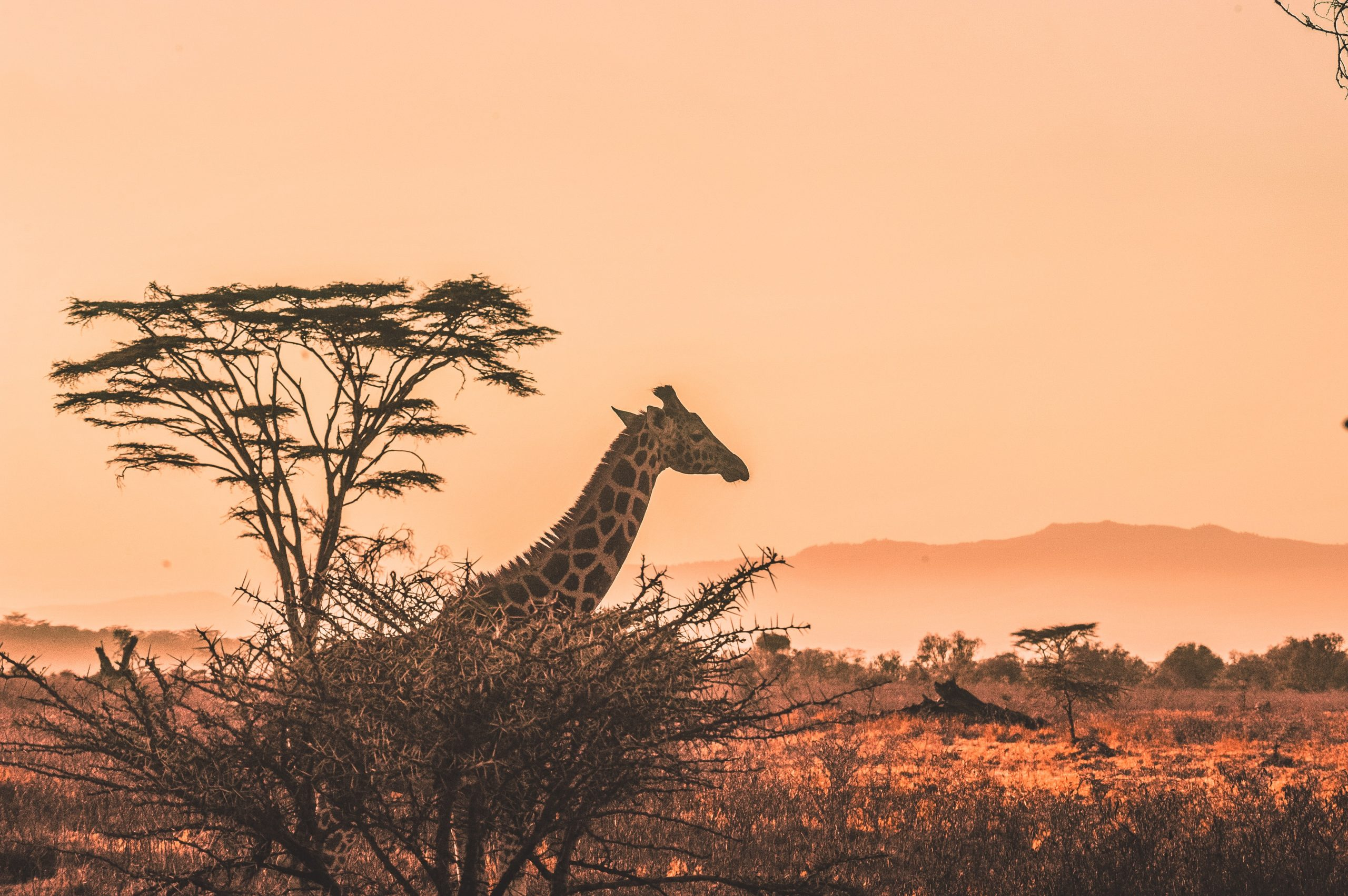 kenya animal safari sighting checklist